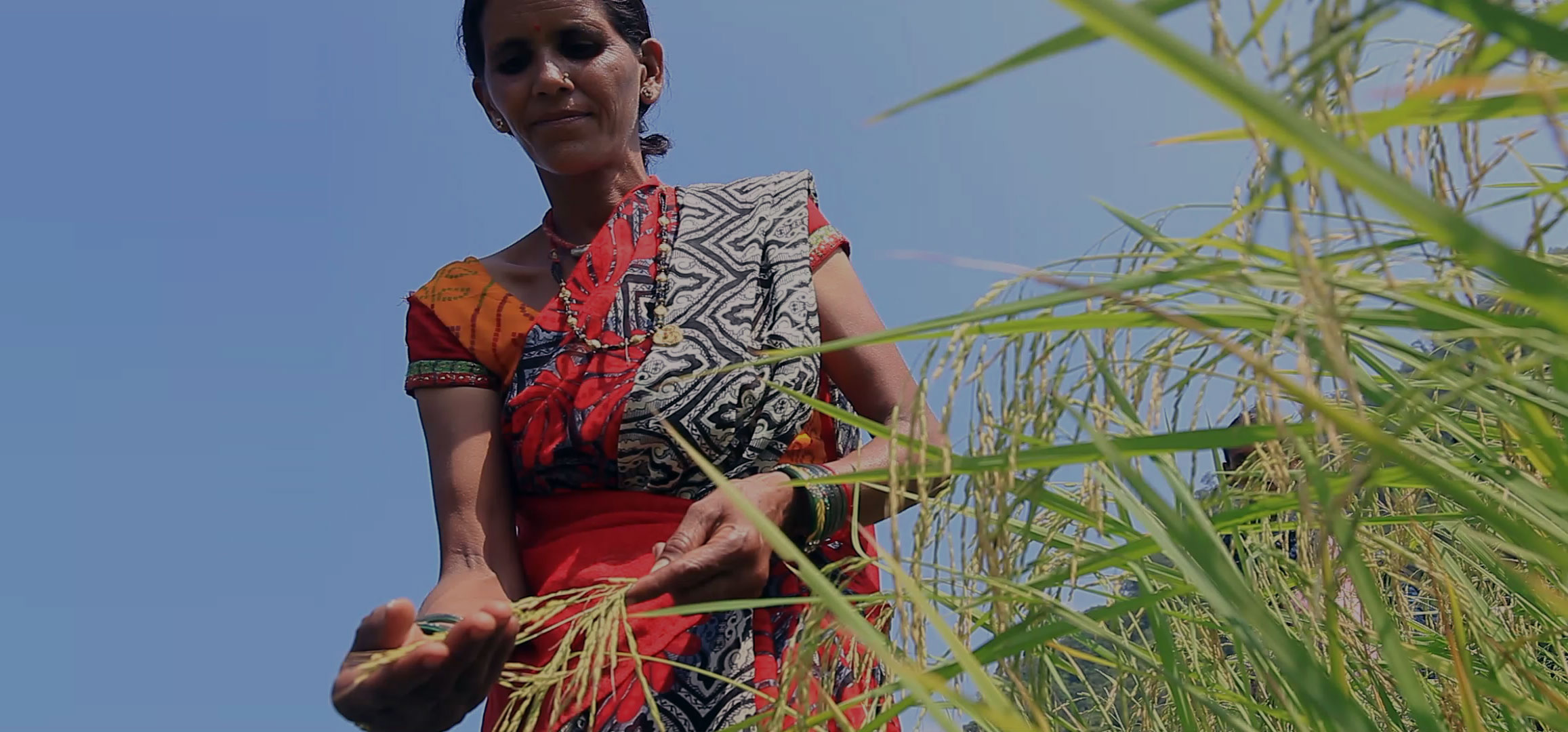India's Pioneer Organic Food Company