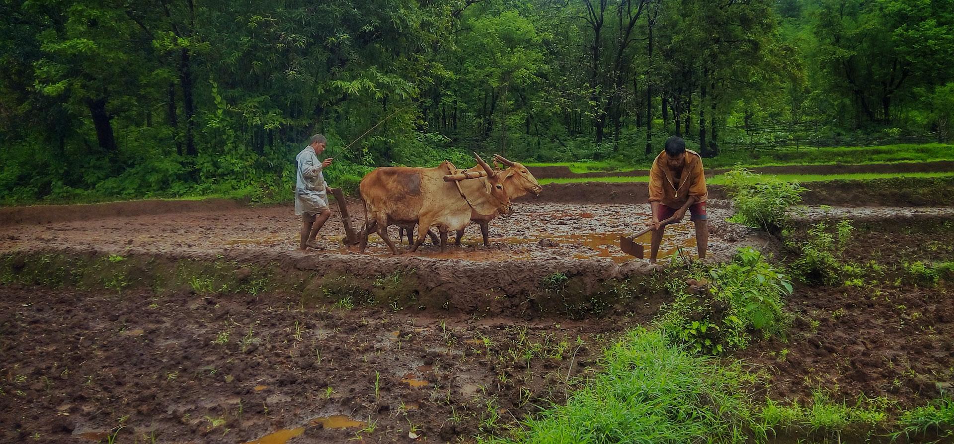 75,000+ Farming Families