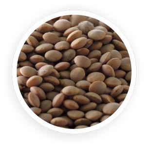 Organic Brown Lentil