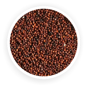Organic Finger Millets