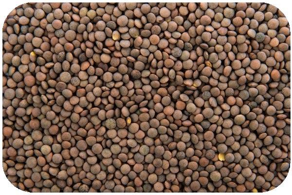 organic-brown-lentil